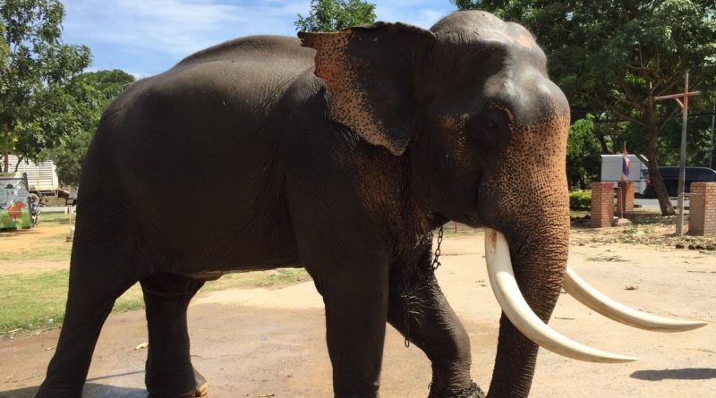 an-elephant-at-elephant-palace-and-royal-kraal