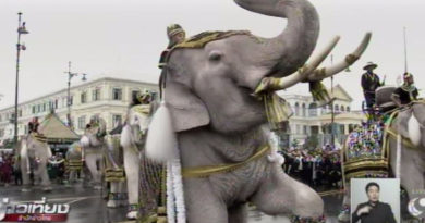 elephants-pay-tribute-to-his-majesty-the-late-king