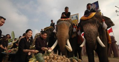 Feast for elephants on Thai Elephant Day