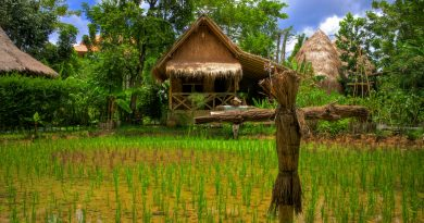 Rice farm in Southern Thailand