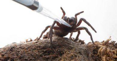 Spider venom