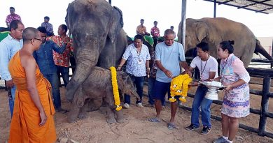 New born baby elephant