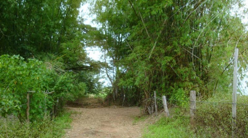 Maha Sarakham forest