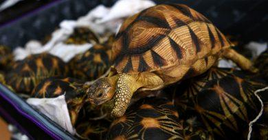 Malaysia seizes endangered tortoises
