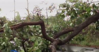 Storm fells tree in Phichit