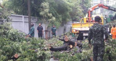 Tree falls Sukhumvit soi 53