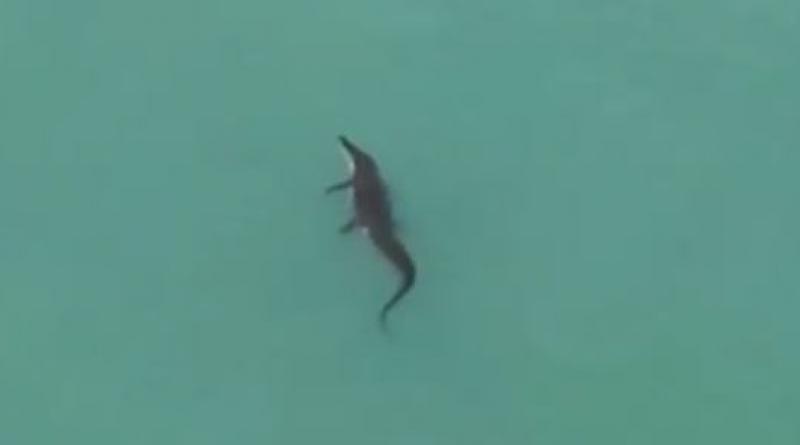 Phuket crocodile resized