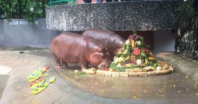 Thai Hippo birthday
