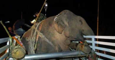 Injured elephant reaches Elephant Hospital