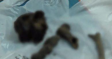 New bones found