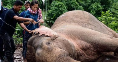 Rescued elephant feeling better