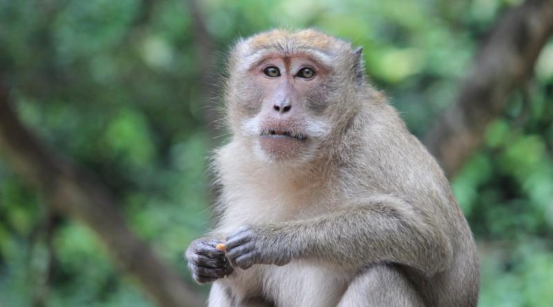 Monkey Bay resized