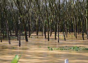 Phang Nga flood