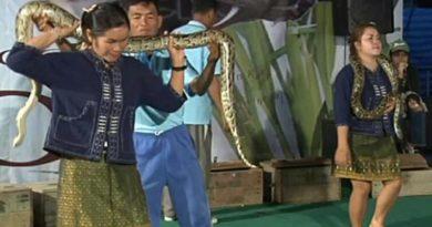 Resized snake show Khon Kaen