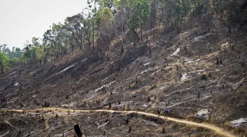 Slash and burn farming in Thailand