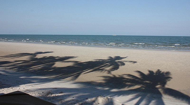 Hua Hin palm trees