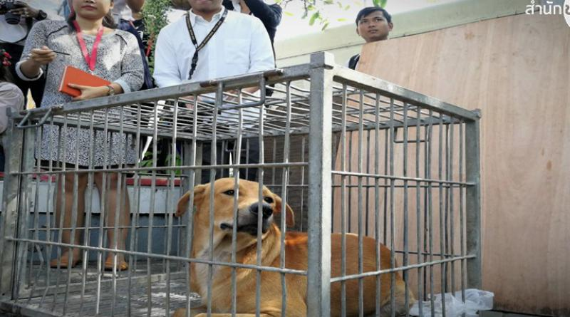 New Bangkok rabies zone