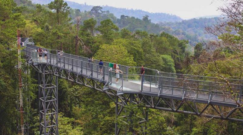 Canopy walkway Queen Sirikit Botanic Garden Chiang Mai