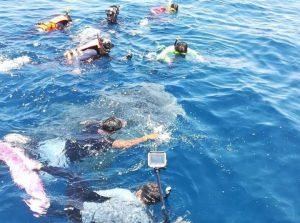 Tourist divers