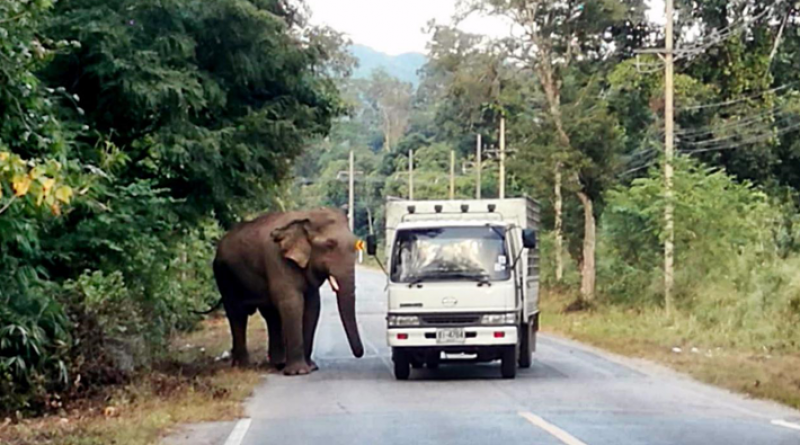 Seven Things To Do When You Face A Wild Jumbo Jumbo_the_elephant.png (16 × 16 pixels, file size: thairesidents com