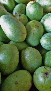 mango new