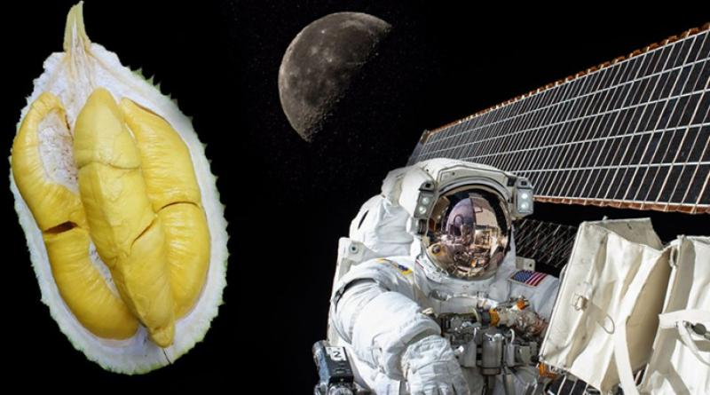 Fried durian heading to space