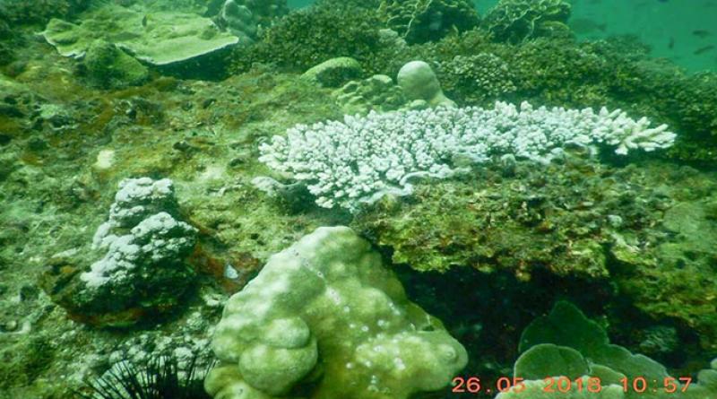Krabi coral bleaching