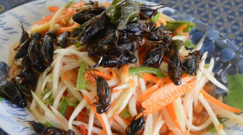 papaya salad somtam with crickets