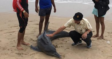 dolphin washes up