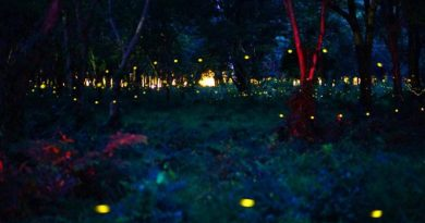 fireflies near Bangkok