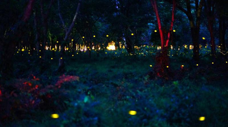 fireflies near Bangkok