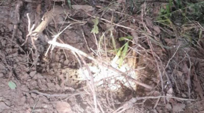 rubber plantation blast