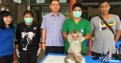 Thai monkeys castrated