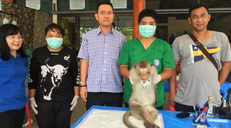 Thai monkeys castrated