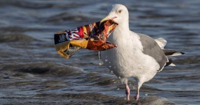 bird and ocean trash