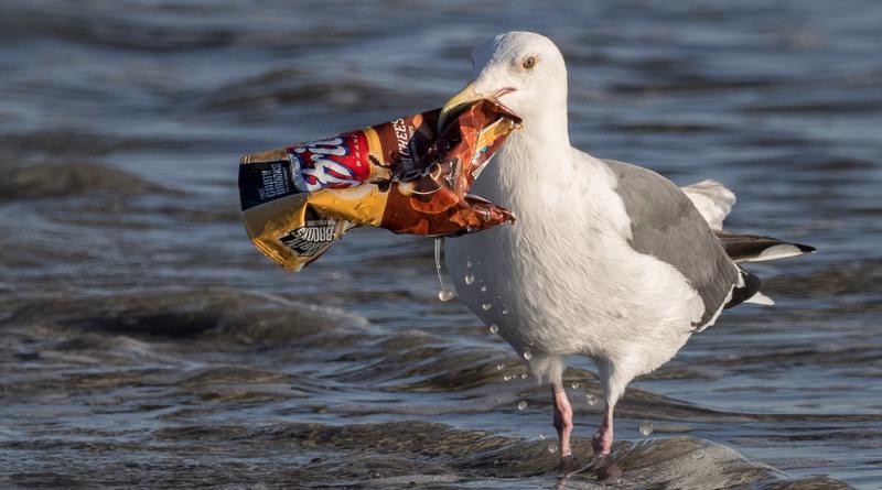 bird and ocean trash