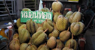 Thai variety of durian