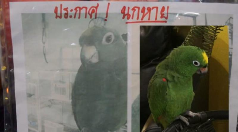 missing Amazon parrot