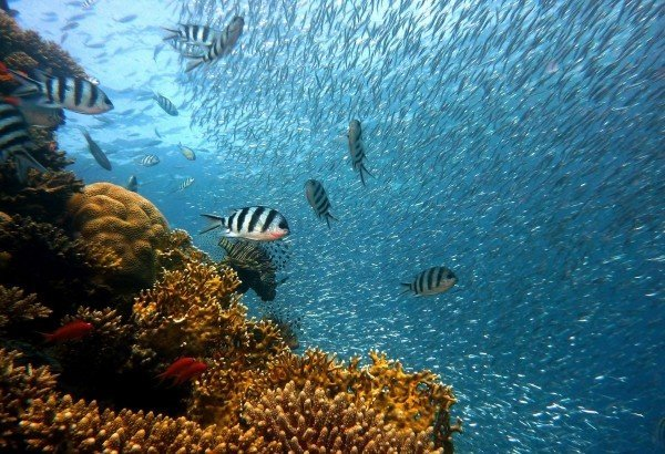 fish-near-coral-reef-in-ocean
