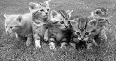 group-portrait-of-kittens-in-grass