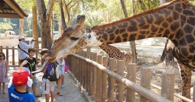 Chiang-Mai-Zoo-cover