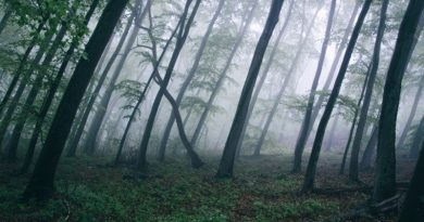 fog-in-forest-001