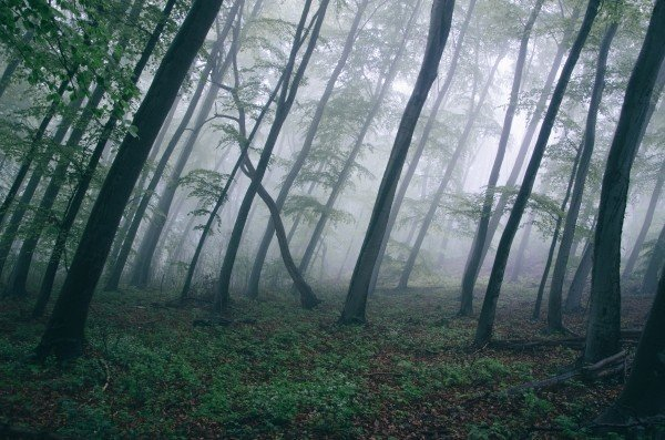 fog-in-forest-1