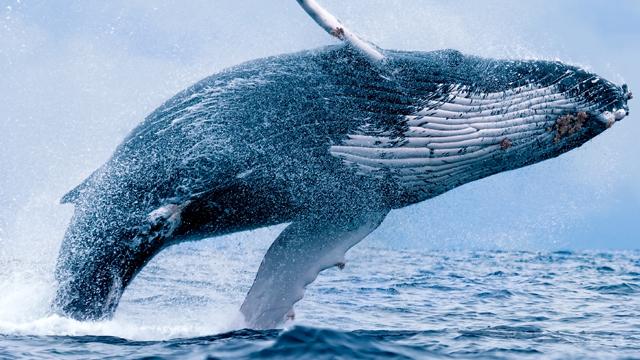 1fcc18d4-d0f9-4908-b964-98d37cf5de38-whale