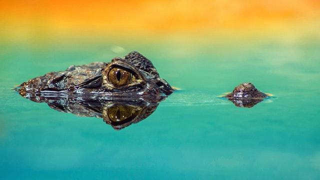 amphibian-animal-close-up-207001