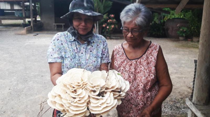 big-mushroom