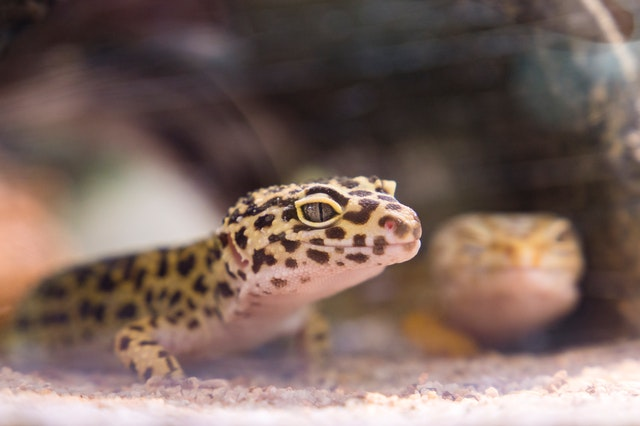 animal-close-up-endangered-species-2078845