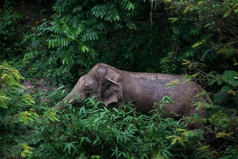 Credit: Thai National Parks