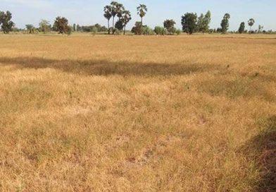 Drought wreaks havoc in Korat