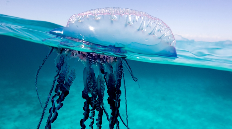 header-jellyfish-sting-วววว